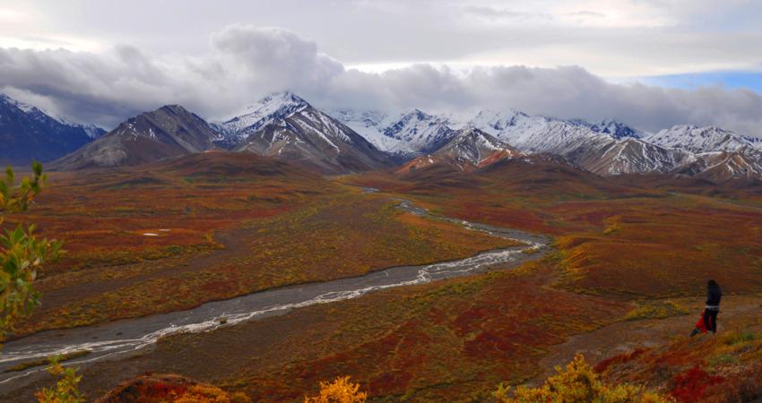 Vibrant fall colors in Denali National Park.