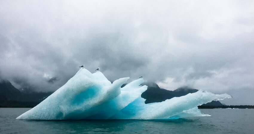 Seagulls tagging along on Bear Glacier icebergs.