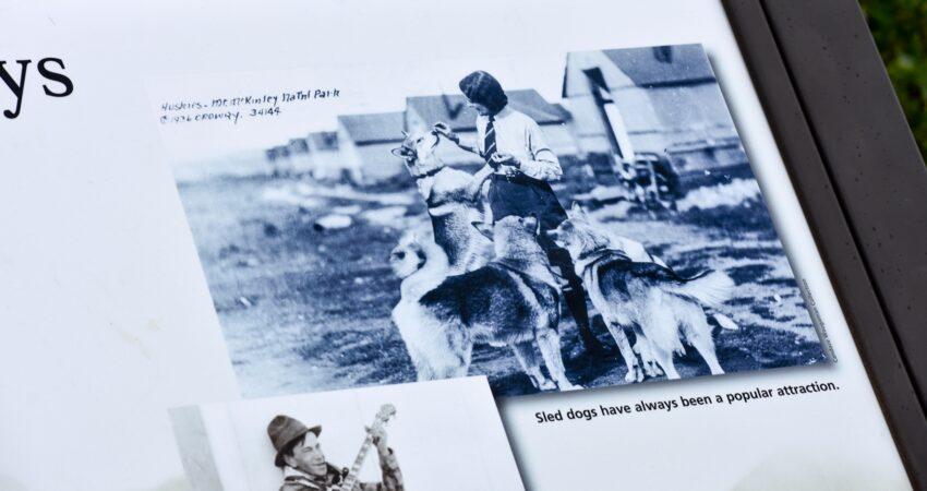 Denali sled dogs circa 1936.