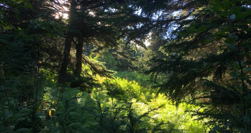 Exploring the forest on the Turnagain Arm Trail.
