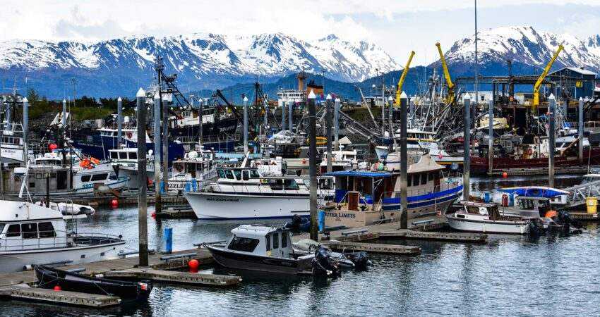 Boats of all shapes and sizes in the Homer Harbor.