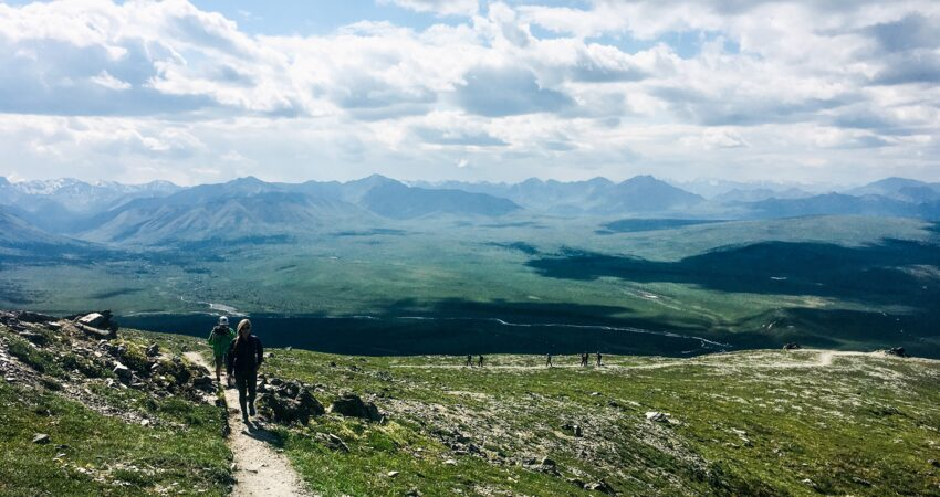 Reaching the top of the Savage Alpine Loop Trail in Denali National Park.